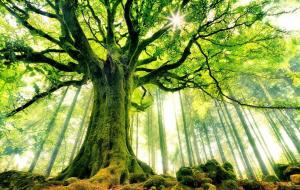 arbre pillier