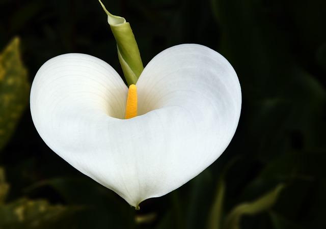 flower-989297_640